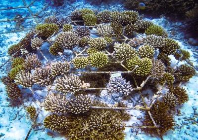 LARGE frame (108 coral fragments)