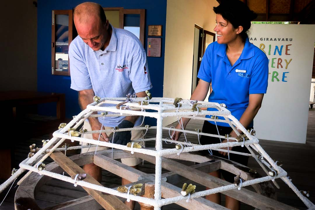 Attaching coral fragments to a Reefscapers frame, Landaa Giraavaru