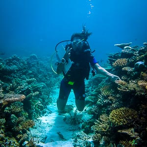 Diver in Coral Garden