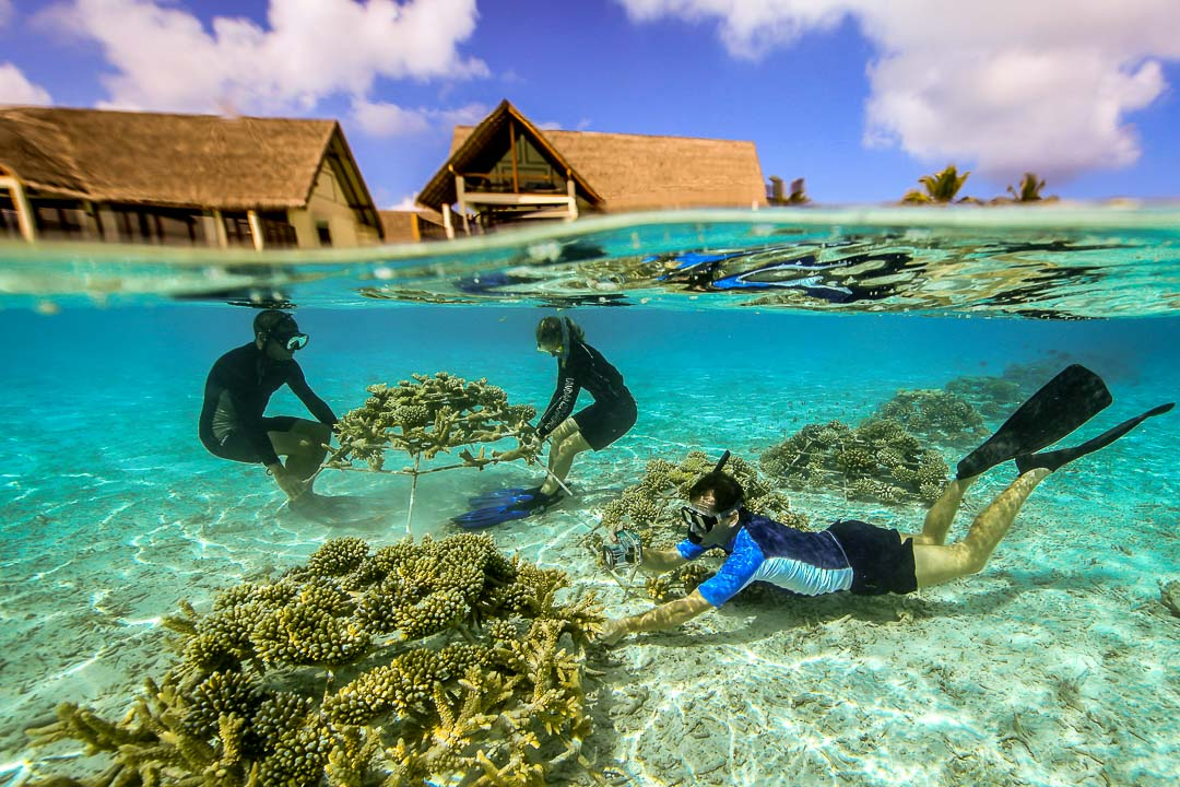 Photographing and maintaining the coral frames, Kuda Huraa lagoon