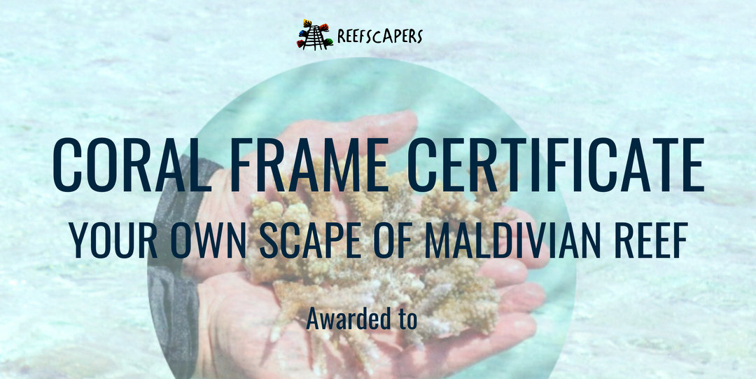 Reefscapers Coral Frame Certificate Maldives