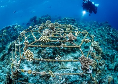Reefscapers at AMAYA with Dive Point