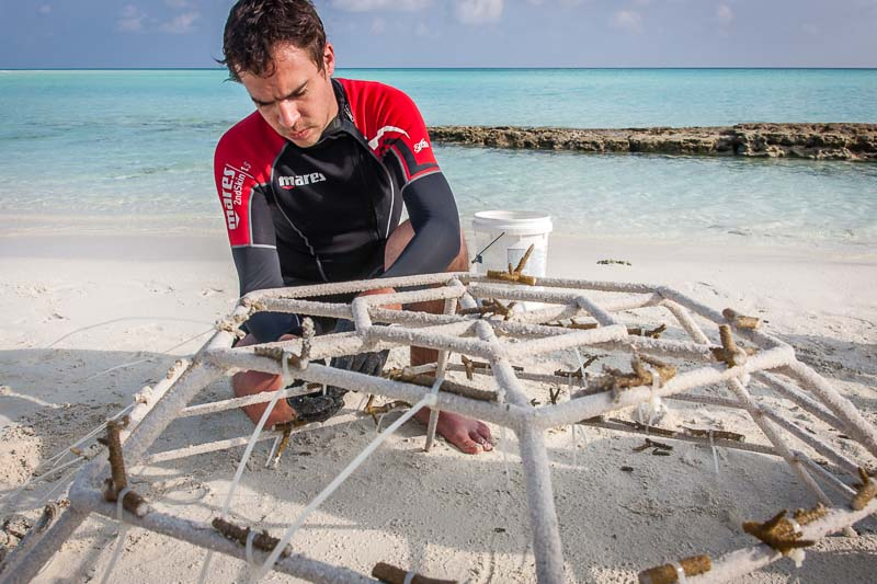 Reefscapers coral propagation on Innafushi