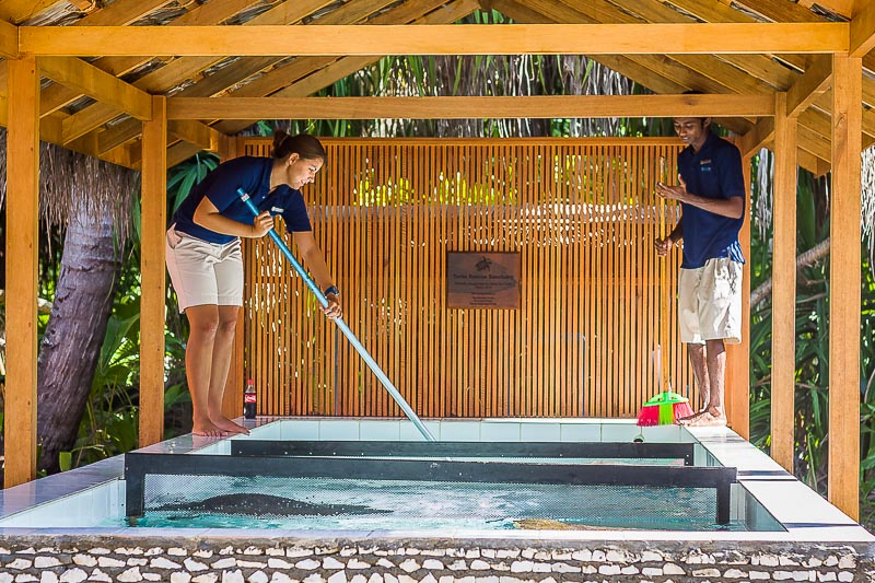 Turtle pool cleaning, Seamarc Maldives, Eco-Volunteers