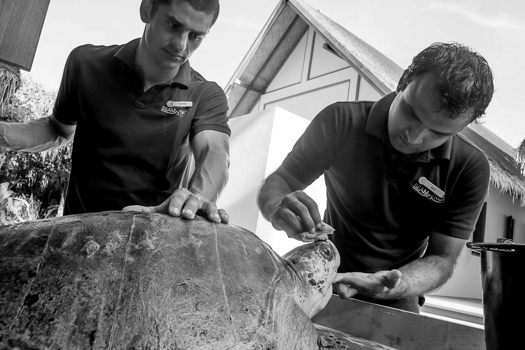 Turtle rehabilitation at the Marine Discovery Centre, Landaa Giraavaru