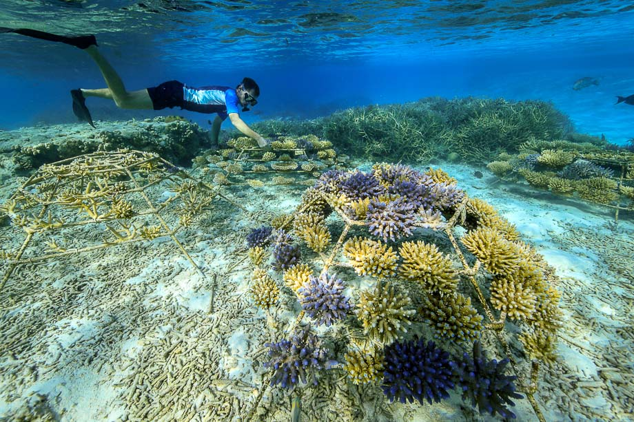 Moving Reefscapers coral frames - Seamarc director Thomas le Berre at Kuda Huraa, Maldives. (c) George Steinmetz