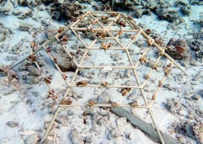 Coral frame SH032 (Feb-2020) ...