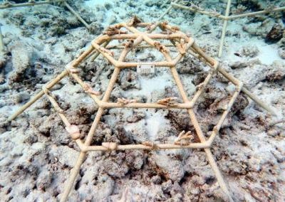 Coral frame SH006 (Feb-20) ...
