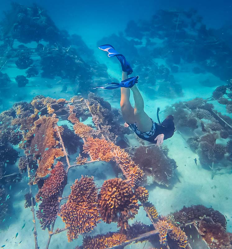 Gulhi Falhu coral rescue project Reefscapers Maldives