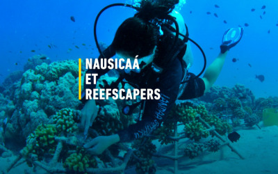 Reefscapers Partnership with Nausicaá Boulogne-Sur-Mer