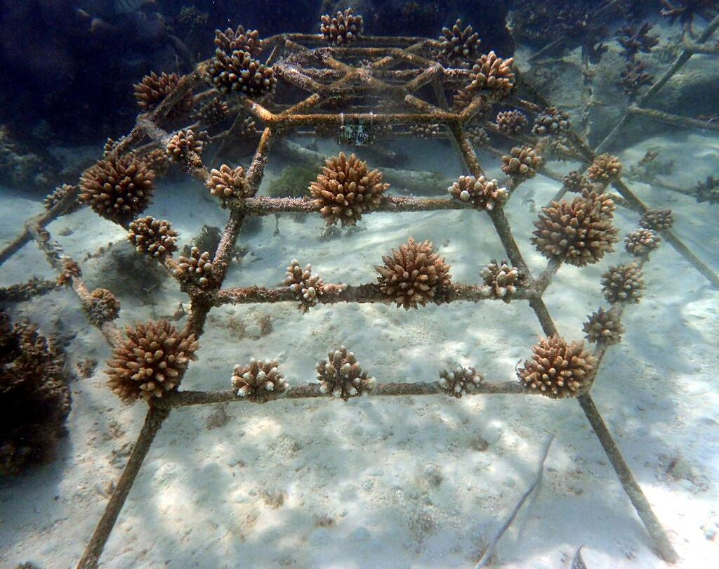 Reefscapers Fulhadhoo coral frame