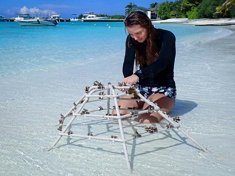 Reefscapers coral restoration at Sheraton Maldives