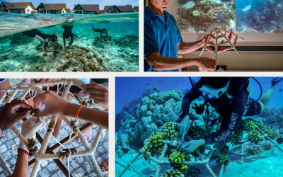 Reefscapers Vacancy for a Communications Intern