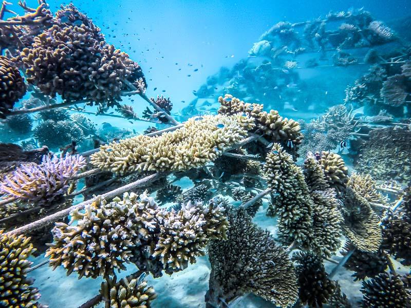Sheraton Maldives coral pyramids artificial reef