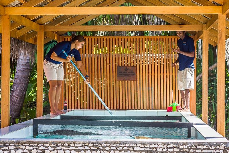 Turtle pool cleaning, Seamarc Maldives, Eco-Volunteers