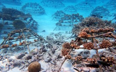 Marine Biology projects at Sheraton Maldives